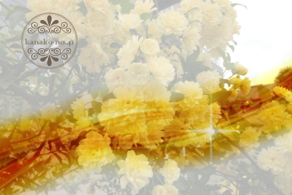モッコウバラと記憶の香り…